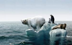 Efectele incalzirii globale: In timp ce Europa ingheata la temperaturi extreme, Polul Nord se topeste