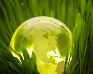 Colaborarea japonezo-columbiana rodeste iarba care reduce efectele de sera