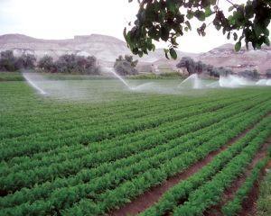 Ministerul Agriculturii aloca 145 de milioane de euro pentru sistemul de irigatii