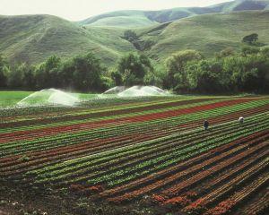 Irigarea culturilor agricole. AFIR a publicat Ghidul Solicitantului pentru submasura 4.3