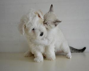 Cinci boli care pot fi transmise de animalul de companie si cum  puteti sa le evitati