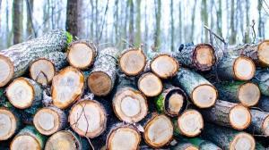 Consiliul Concurentei a amendat trei companii de pe piata lemnului pentru trucarea unei licitatii