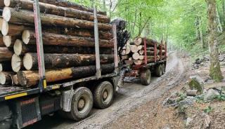 Peste 4.000 de pomi de Craciun taiati ilegal au fost confiscati de Politia Romana
