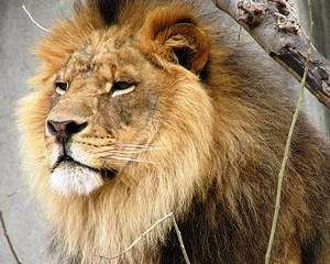 Leul n-o duce prea bine: A avut cel mai slab inceput de an din 2010 si pana acum