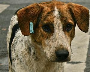 Cand va fi aplicata legea privind cainii fara stapan