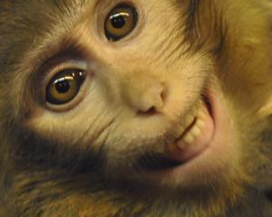 Iranul sustine ca a trimis a doua maimuta in spatiu