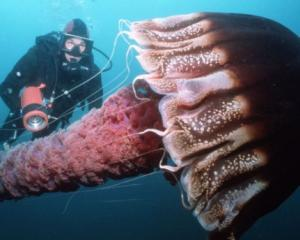 Gigantii Oceanelor vin la Muzeul Antipa