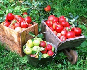 Comertul cu produse agroalimentare a inregistrat un excedent de aproape 325 milioane euro, in 2013