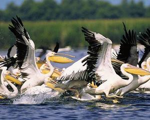 Ministerul Mediului si-a propus sa acceseze fonduri europene de 58 de milioane de euro pentru Delta Dunarii