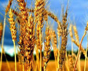 Agricultorii care vor sa-si modernizeze exploatatiile pot cere bani de la stat
