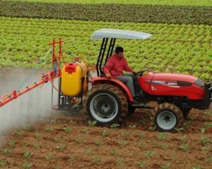 O parte din statele UE se lupta sa respinga cultivarea unui nou tip de porumb modificat genetic