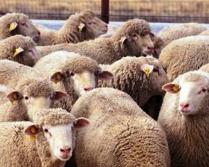 Numarul animalelor sacrificate in Romania a crescut in luna mai