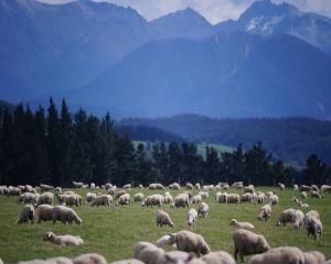 Modele agricole sustenabile pentru zona montana a Romaniei