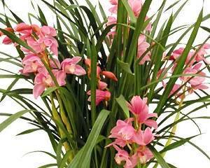 Orhideea, floarea preferata a romanilor in timpul Craciunului