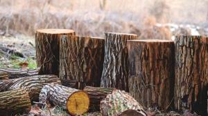 Autoritatile de control depisteaza doar 1% din totalul taierilor ilegale de paduri din Romania