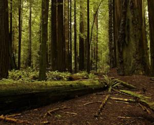 Cum ar putea fi eficientizata concurenta pe piata lemnului