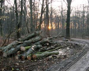 Cati copaci s-au taiat in Romania in 2014