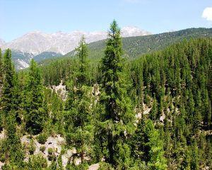 Padurile din Romania: Suprafata a crescut in 2013