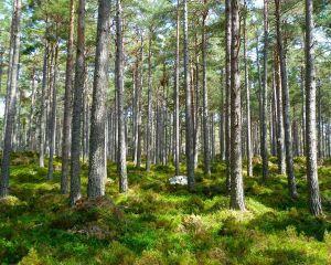Peste 24.000 de hectare de paduri in patrimoniul natural UNESCO