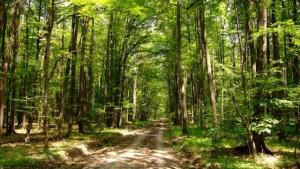 Statul va pierde pana la 6,5 miliarde de euro daca Dragnea da padurile Bisericii, avertizeaza silvicultorii