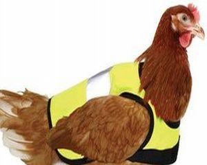 Full Chicken Jacket: Antreprenorii britanici au lansat vestele reflectorizante pentru gaini