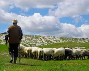 Ciobanas cu 300 de oi, vrei sa cumperi titluri de stat sau actiuni de la noi?