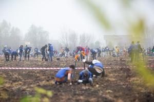 Romania nu inseamna numai defrisari. 71.000 de copaci au fost plantati numai in aceasta toamna