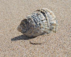 Plajele de pe litoralul romanesc vor fi monitorizate de Administratia Nationala Apele Romane