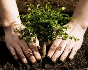 65 de hectare de teren vor fi impadurite in Satu Mare
