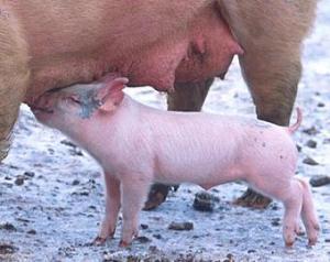 Victor Ponta: Cei care traiesc din agricultura incep sa nu mai munceasca degeaba