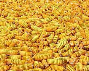 Productia agricola in anul 2013: Cresteri la toate culturile