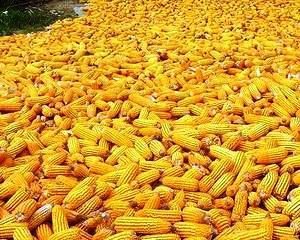 Anul 2013 in agricultura: Productie bogata, profituri mici