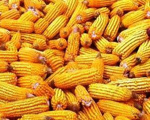 Preturile la cereale vor scadea: Productia creste mai rapid decat cererea