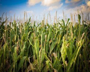 Daniel Botanoiu: Balanta comerciala a produselor agroalimentare este pozitiva