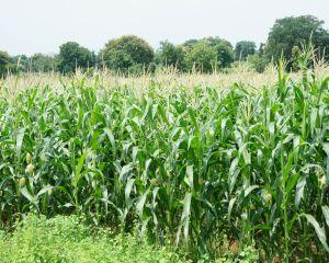 Comertul cu produse agricole a inregistrat un excedent de 500 milioane de euro in 2014