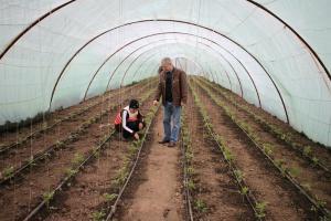 Gerul scumpeste masiv preturile legumelor romanesti