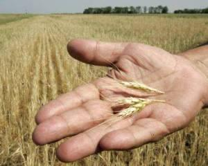 Analizele Manager.ro: 2013 va fi un an agricol foarte bun