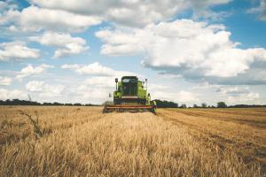 Producatorii agricoli il critica si contrazic pe Daea: Declaratiile ministrului au prabusit pretul cerealelor. Nu am avut productie istorica