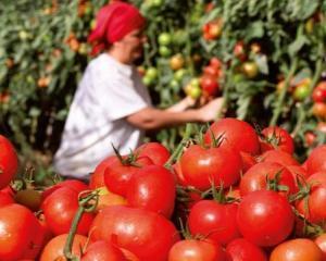 Cursuri gratuite de acreditare in productia de conserve din fructe si legume si de antreprenoriat, pentru femeile fara venituri