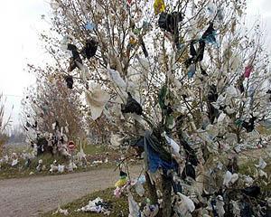 Parlamentul European ia masuri impotriva pungilor de plastic poluante