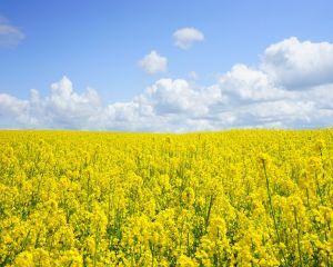 Fondurile pentru investitiile in exploatatii agricole au fost epuizate