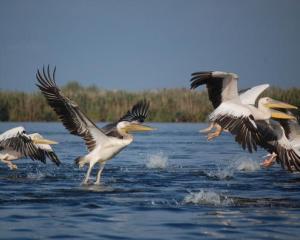 Romania si Bulgaria, pact pentru protejarea pasarilor din zona Dunarii
