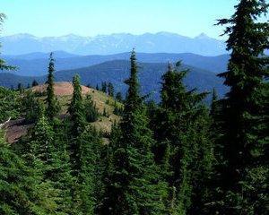 Din cauza unei legi, Romsilva a pierdut un milion de hectare de padure
