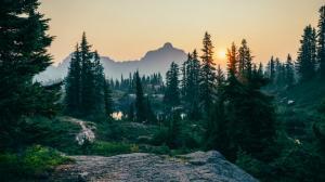Romsilva, acuzata ca se pregateste sa taie paduri seculare din Parcul National Semenic