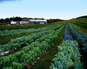 Unul dintre cei mai mari retaileri din Europa devine membru fondator al unei cooperative agricole din Romania