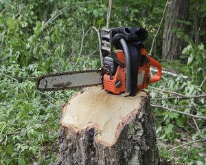 Greenpeace Romania: In 2016, la nivel national au fost inregistrate aproximativ 9500 de cazuri de taieri ilegale de arbori