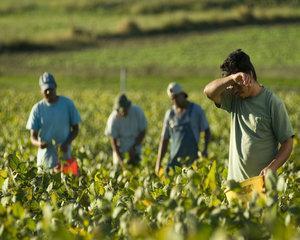 Ministerul Muncii: Romanii care lucreaza in Italia si-au gasit un loc de munca in Italia prin cunostinte sau prin firme private de mediere