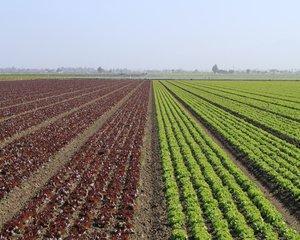 Proprietarii de terenuri au vandut peste 54.000 de loturi agricole, de la inceputul anului. Vezi topul judetelor cu cele mai multe tranzactii