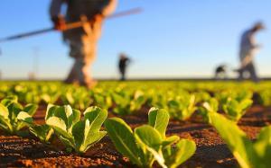Salariul net in sectorul agricol se ridica la 3.000 de lei. Guvernul spune ca vrea sa aduca Diaspora acasa