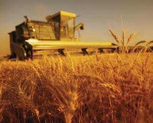 Despagubiri pentru producatorii din sectorul vegetal afectati de seceta